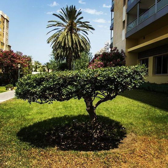 Jardines del Hotel Tres Anclas de la Playa de Gandia Hotel3anclas Gandiabeach Hoteltresanclas