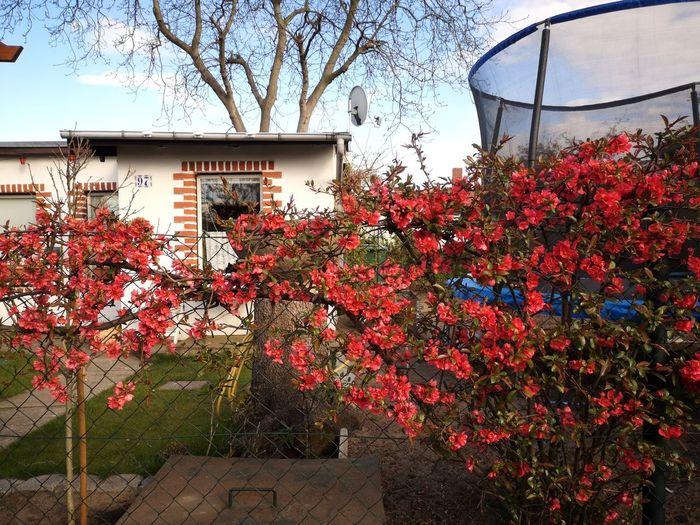 Flowering tree by building against sky