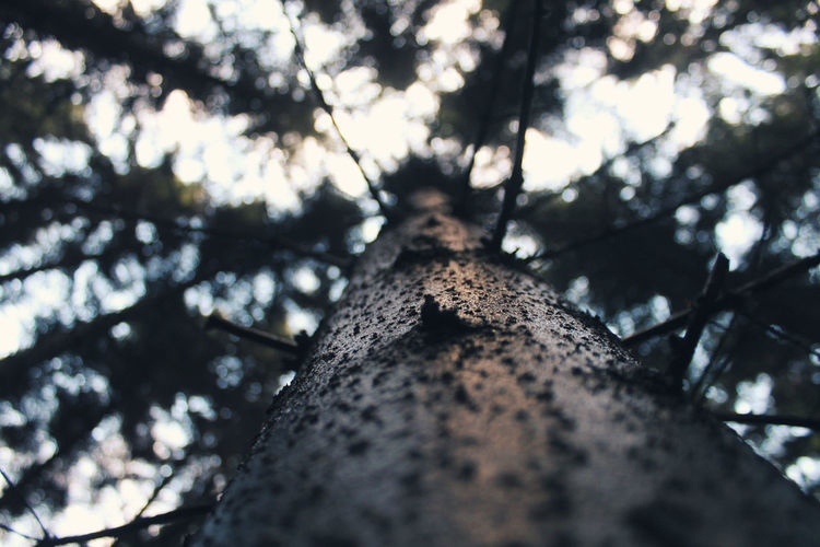 EyeEm Nature Lover EyeEmNewHere Nature Nature Photography Tree Trees View View From Below Beauty In Nature Branch Canonphotography Close-up Day Forest Growth Low Angle View Nature Nature_collection Naturelovers No People Outdoors Selective Focus Sky Tree Tree Trunk