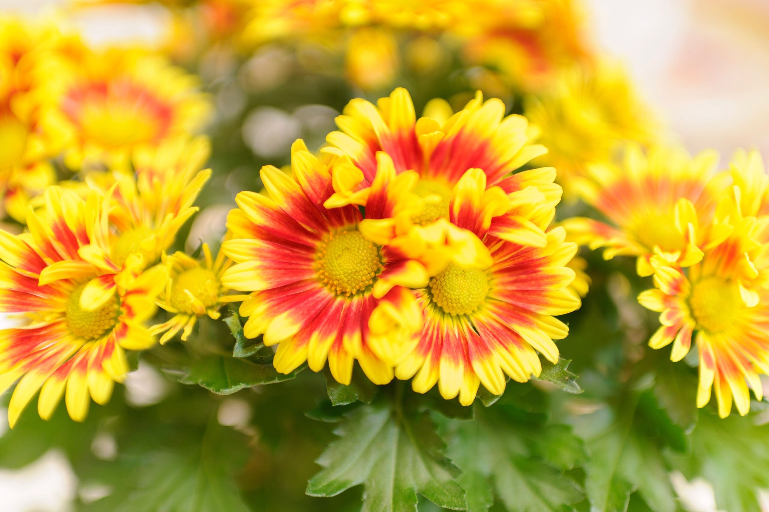 flower, fragility, freshness, beauty in nature, flower head, yellow, nature, petal, growth, plant, no people, outdoors, close-up, blooming, day
