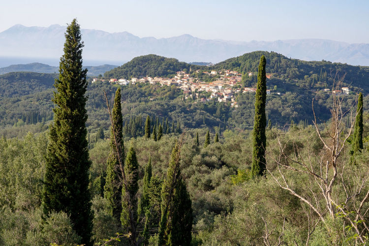 Greece Greek Islands Corfu Mountain Tree Scenics - Nature Outdoors Green Color Nature Landscape Tranquility Environment Tranquil Scene Ionian Islands Korfu Cypress Olive Trees Olive Tree