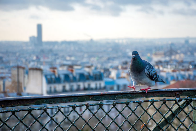 Seagull perching on railing against cityscape