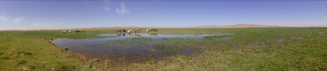 Animal Drinking Animals Drinking Beauty In Nature Grass Horses Landscape Mongolia Mongolian Horse Scenics Sky Water