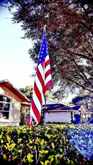 Flag Patriotism Stars And Stripes No People Day Outdoors American Flag Scenics Cultures Tree Sky Social Issues Backgrounds Low Angle View Triksaphotography Greatphotosofeyeem Happytobealive USAflag Sunthrutrees Whatmakesyouhappy Architecture Morninginflorida Just Amazing Tranquility Growth