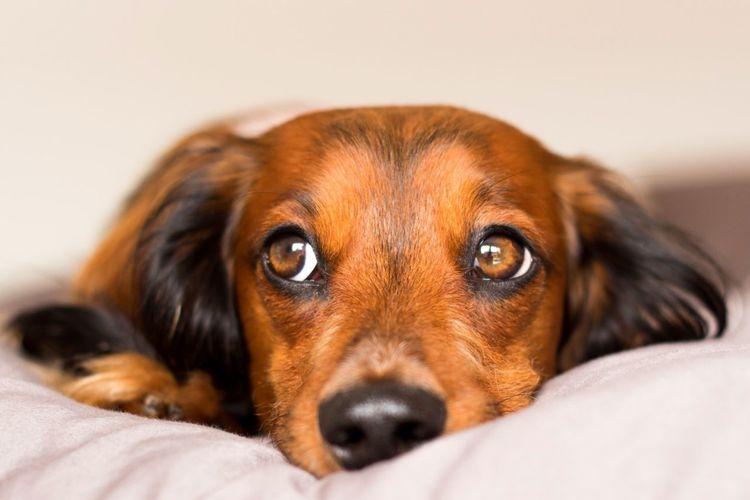 Dog Dachshund Dogs Cute Pets Cute Teckel Dackel EyeEm Best Shots I Love My Dog