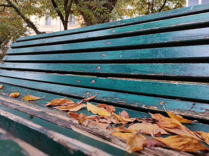 High angle view of leaves on bench in park