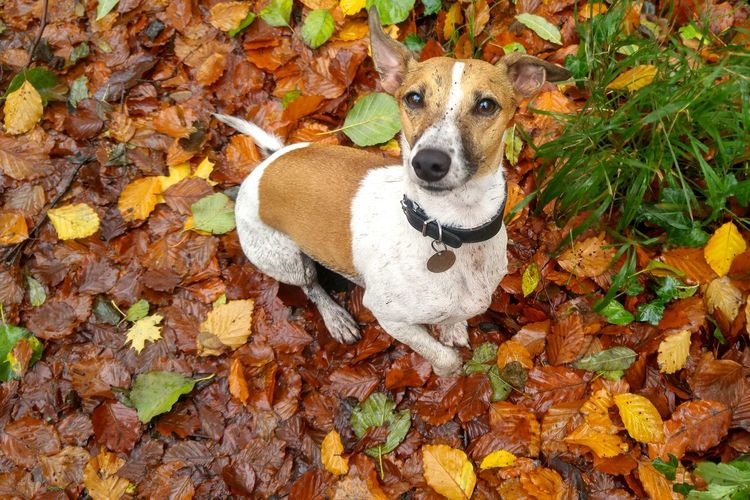 Portrait of dog sitting on wet autumn leaves