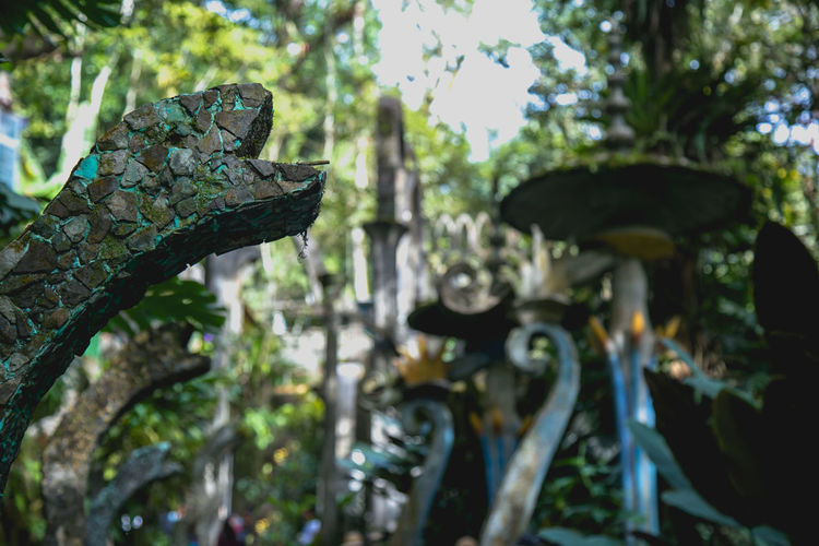Close-up of rusty metal on tree
