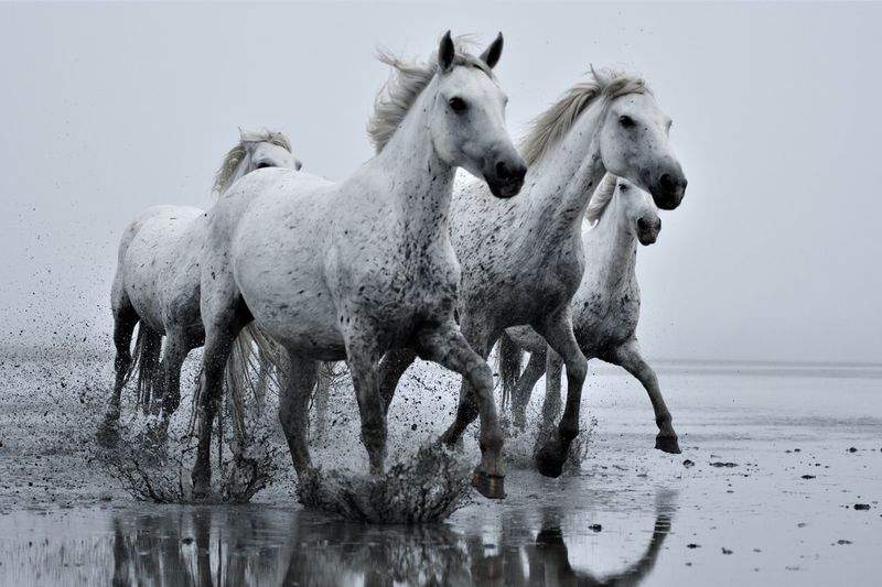 Horses standing in the water