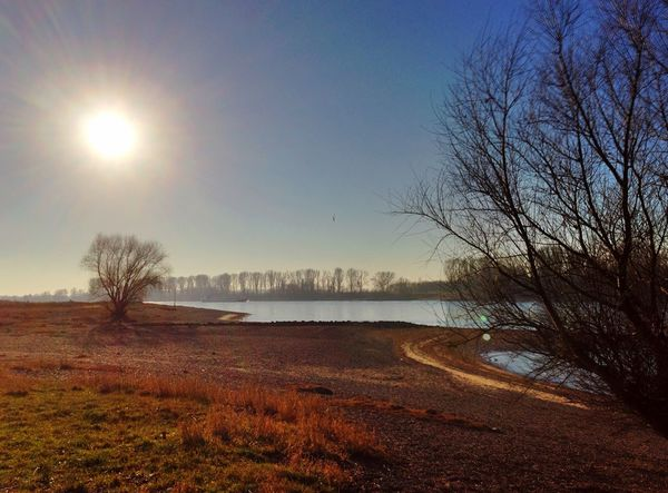 river rhine Tree Nature Tranquil Scene Beauty In Nature Sunlight Scenics No People Outdoors