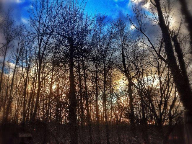 Winter Sunset Woods EyeEm Nature Lover