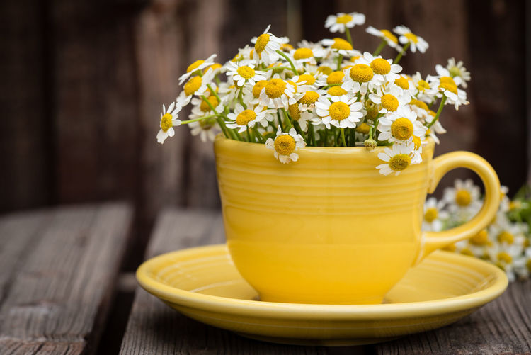 Yellow cup filled with chamomile flowers on wooden plank table. Chamomile Paint The Town Yellow TeaCup Blooming Close-up Cup And Saucer Day Flower Focus On Foreground Fragility Freshness No People Table Wood - Material Yellow