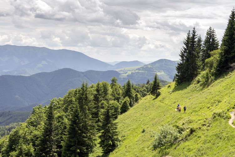 Velka Fatra Animal Animal Themes Beauty In Nature Cloud - Sky Coniferous Tree Day Environment Green Color Land Landscape Mountain Mountain Range Nature No People Non-urban Scene Outdoors Pine Tree Plant Scenics - Nature Sky Tranquil Scene Tranquility Tree