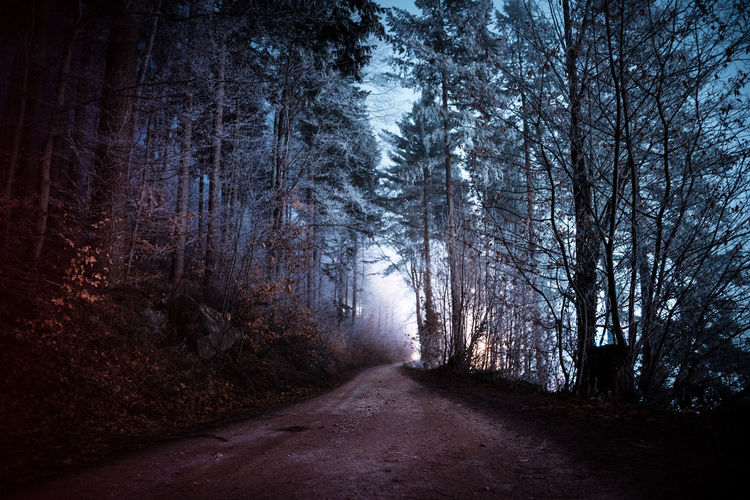 Tree The Way Forward Forest Road No People Tranquility Nature Night Tranquil Scene Beauty In Nature Dirt Road WoodLand Empty Road Scenics - Nature Outdoors Nightphotography darkness and light Winter Cold Temperature Ice Snow