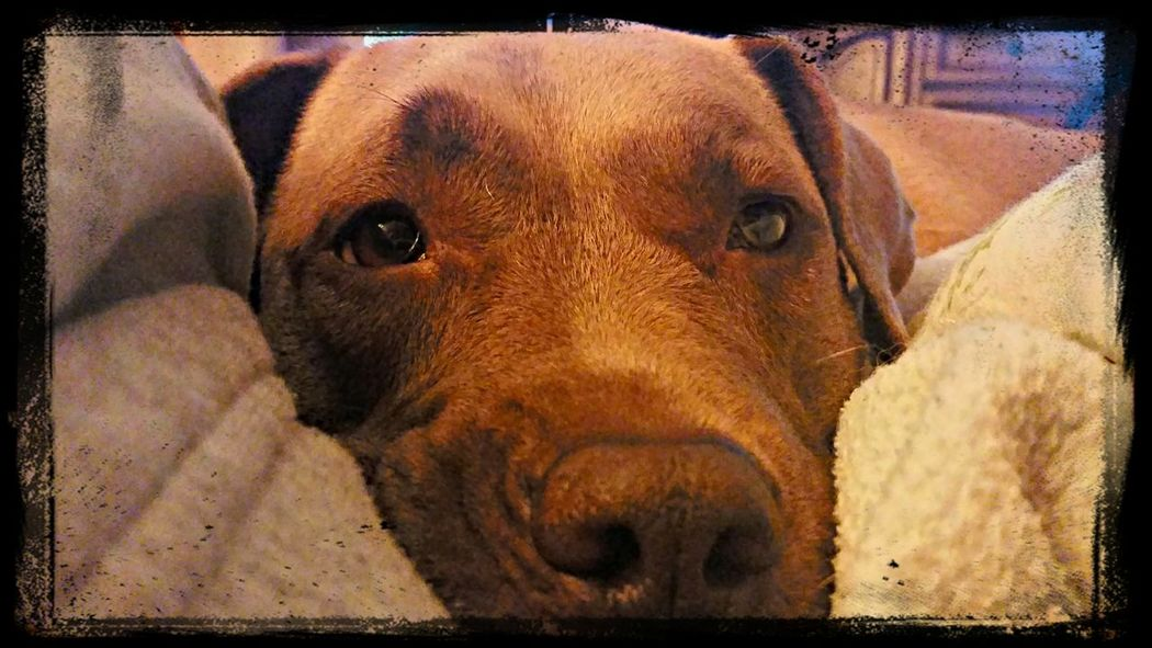 One of mybesy friends! I Love My Dog Hanging Out Cuddlebuddy