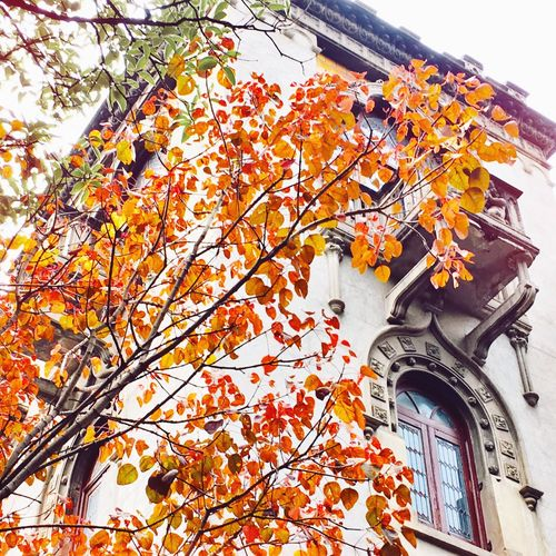 Low angle view of tree by building during autumn