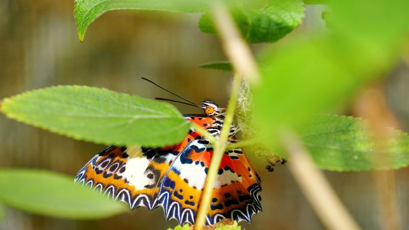 Happy Birthday! Buterfly Nature Beautyful Colours Insect Close-up Butterfly - Insect Outdoors Beauty In Nature Day