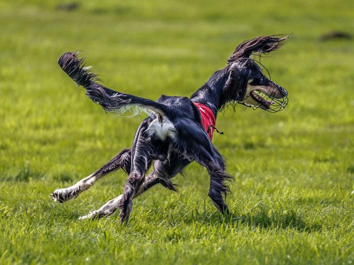 Side view of black dog on grassy field