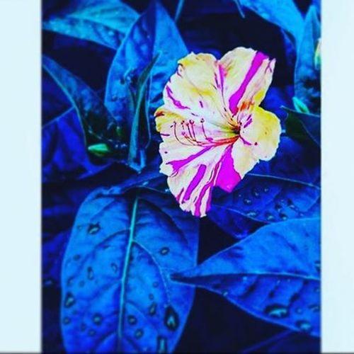 Κι εγώ επιστρέφω σε'σενα.Σαν αυγή,σαν βροχή, σαν χάδι. Marinafloisvou φαληράκι RainyDay Rainfall Flower Colourful Blueleaves Beautiful MyPhotography Mypassion Coloursareeverywhere Feelthelove Loveisintheair Justbreath Dream Care Love Trust VSCO Vscolove Vscorain Vscoflowers Vscoathens Vscoaddict Instagreece instamood instalove instalifo