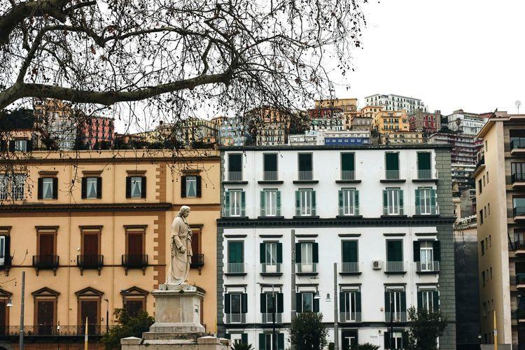 Naples Tree