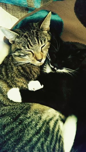 Cats Suzi77 Cat Lovers Animals Animals Being Bros