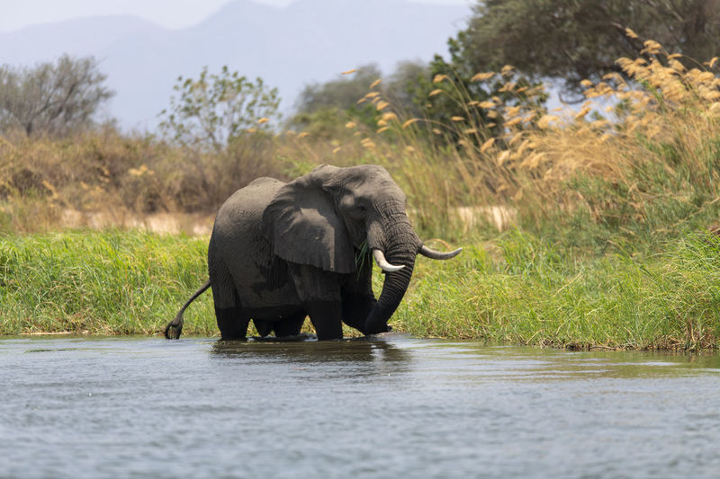 View of elephant in the sea