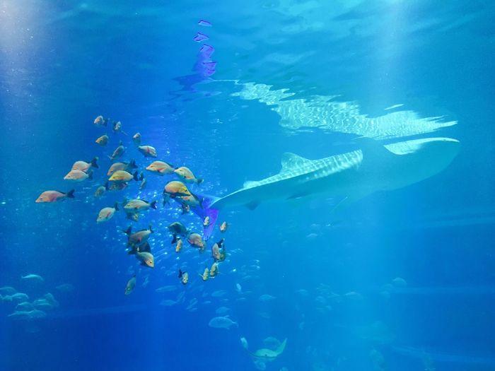 綺麗ー! Hello World Taking Photos Enjoying Life Check This Out Relaxing Fish Beautiful 海遊館 Good Times Blue