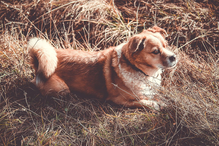 autumn dog One Animal Dog Canine Mammal Animal Themes Pets Domestic Animal Domestic Animals Vertebrate Field Land Grass Looking Away Plant Looking Relaxation Nature Day No People