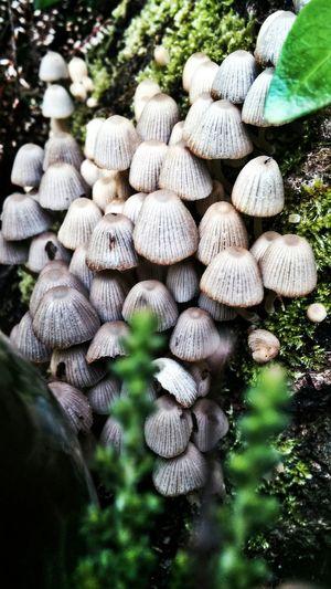 Pilze Mushrooms