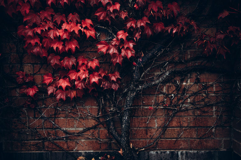 Low angle view of flowering tree during night