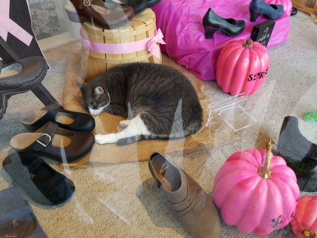 """""""The cat was not for sale at this shoe store... just taking a nap! 😽 Cat High Angle View Indoors  not my First Eyeem Photo Pink Color Window Reflections Been There. The Week On EyeEm Done That. From My Eyes To Yours Nappin The Way I See It Best Eyeem Pics EyeEm Best Shots Check This Out From My Point Of View Relaxing Eye4photography  Taking Photos Shoe Store Napping Cat Day The Purist (no Edit, No Filter) Not For Sale in Sonora, California (USA)"""