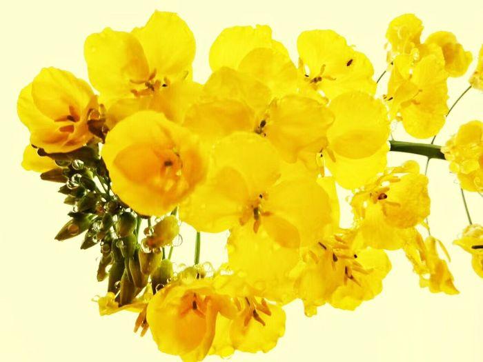 Fllower Spring Chengdu