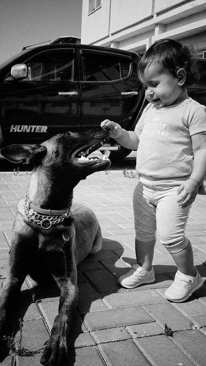 One Animal Malinois Malinoislife Malinoislove Malinoislovers Animal Animal Head  People And Dog People With Dogs Black And White