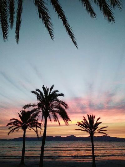 Beach SPAIN El Arenal Playa Palma De Mallorca Mallorca First Eyeem Photo