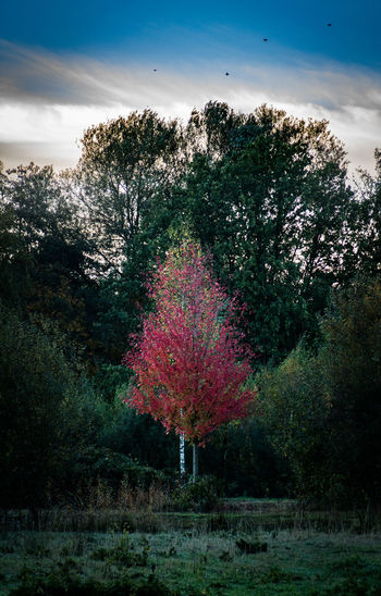Tree Plant Growth Sky Nature Beauty In Nature Tranquility No People Scenics - Nature Tranquil Scene Land Landscape Day Environment Field Cloud - Sky Flower Grass Outdoors Flowering Plant Red Tree Autumn Autumn Mood