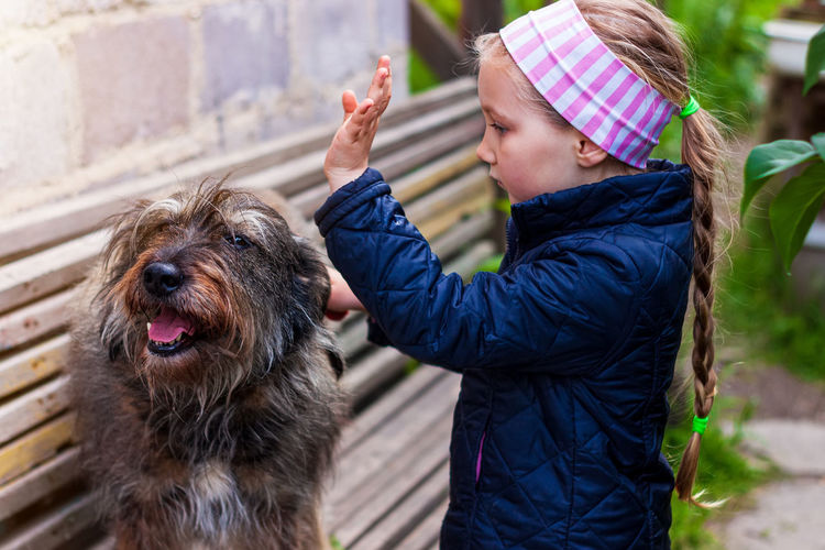 Child combing dog care long fur animal combs for pets love support adoption homeless mongrel shelter
