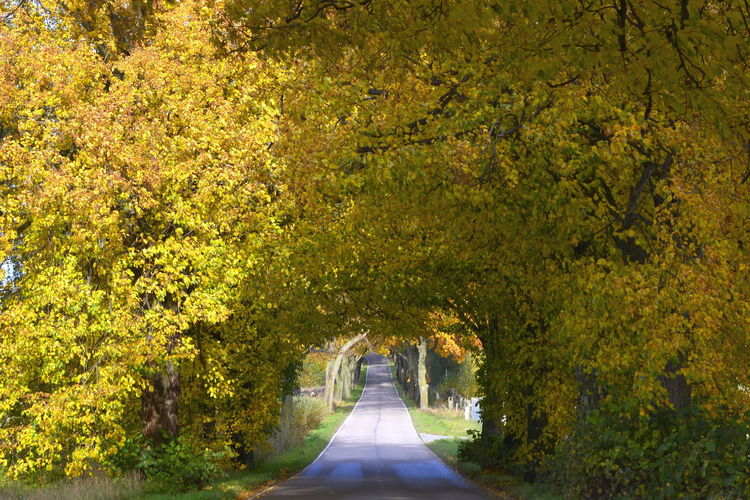 Road amidst trees at park during autumn