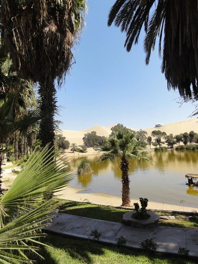 Oasis II Huacca