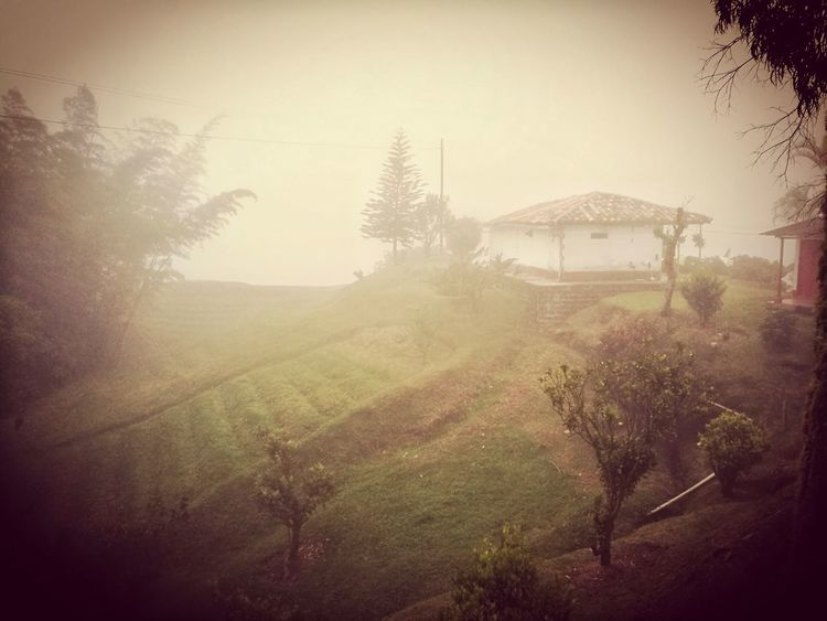 Fog Nature_collection Nature Outdoors Day No People Shiny EyeEm Nature Lover Beauty In Nature Landscape
