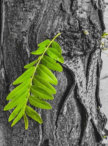 Leaf Plant Part Green Color Plant Nature Growth The Still Life Photographer - 2018 EyeEm Awards