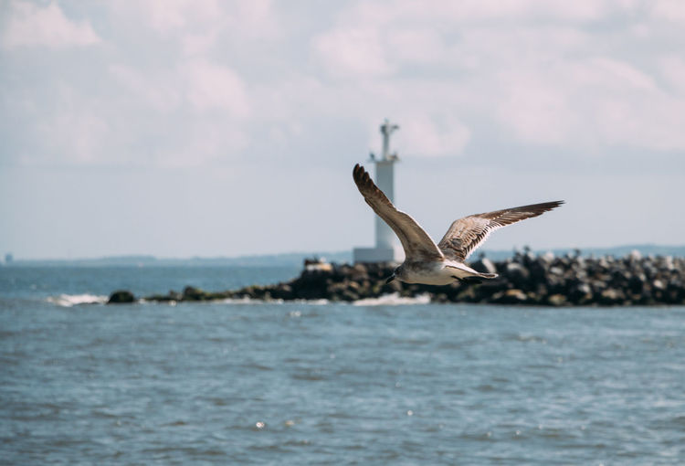 Animal Animal Themes Water Animal Wildlife Animals In The Wild Sea Spread Wings Bird One Animal Flying Sky Waterfront Nature Mid-air No People Beauty In Nature Day Outdoors Horizon Over Water Marine Ocean Ocean Photography