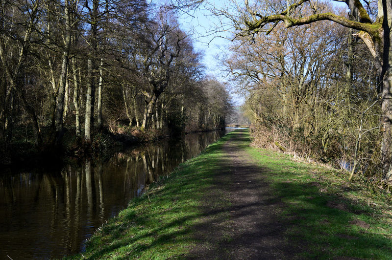Canal Walking Canal Walks Cauldon Canal Staffordshire Staffordshire Moorlands Bare Tree Bare Trees Beauty In Nature Canal Canals And Waterways Day Forest Grass Nature No People Outdoors Sky Tranquility Tree Trees In Winter