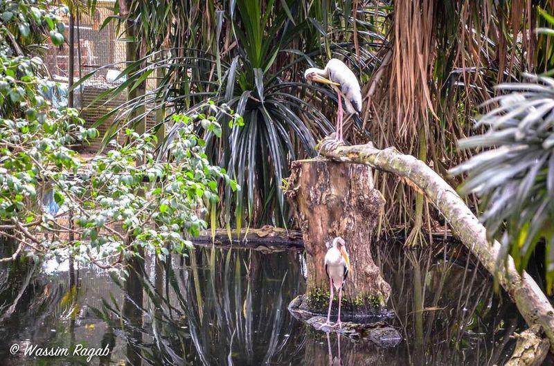 Bird Animal Wildlife Nature No People Outdoors Stork Day Tree Animal Themes