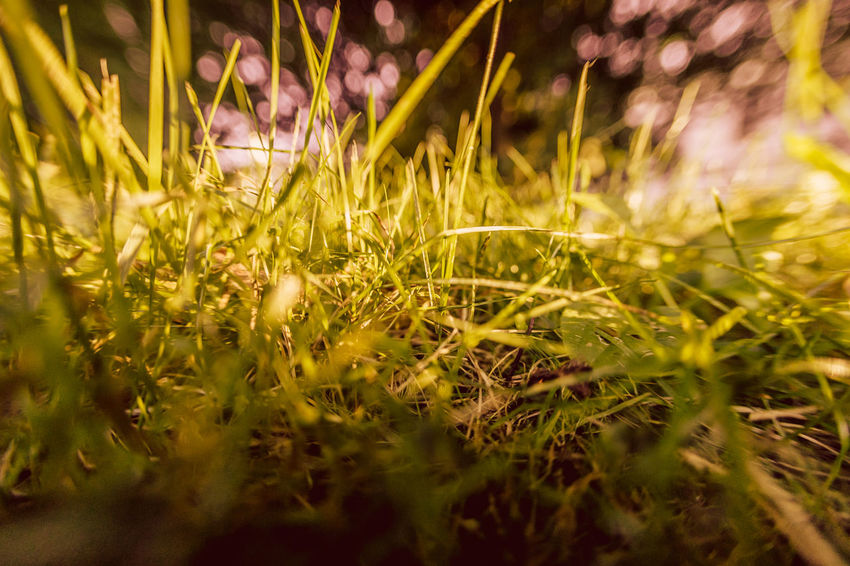 Summer, grass, sunlight, bokeh, abstract Abstract Photography Summertime Sunlight Abstract Beauty In Nature Bokeh Close-up Day Field Freshness Grass Green Color Nature No People Outdoors Plant Selective Focus Sunlight
