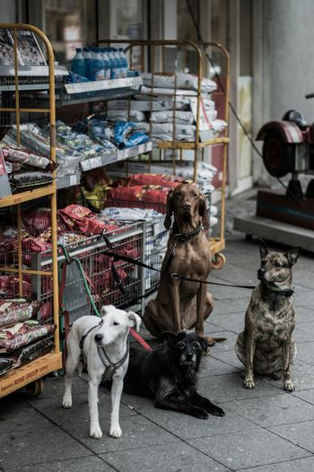 Dogs tied on shelf with food packets
