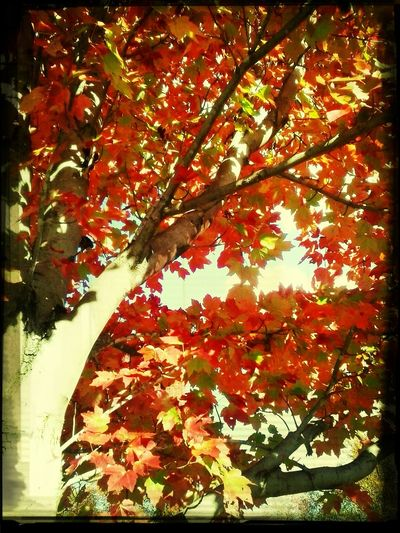 The beautiful trees behind my work. Autumn Autumn Colors autumn leaves