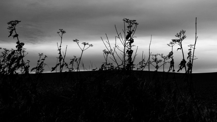 Silhouette plants on field against sky at sunset