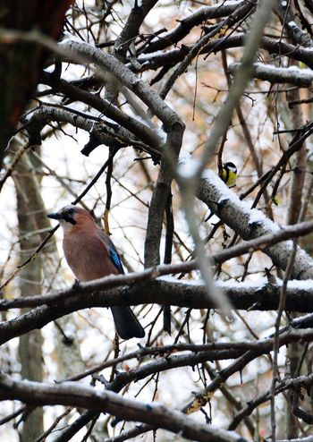 Branch Tree Animals In The Wild Bird Winter Animal Wildlife Perching One Animal No People Beauty In Nature Cold Temperature Animal Themes Nature