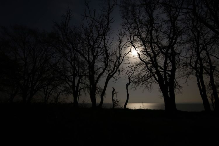 Moon Moon Light Moon Light Shadow Moon Lights Up The Night Tree Silhouette Plant Beauty In Nature Tranquility Sky Tranquil Scene Landscape Non-urban Scene Outdoors Bare Tree Field Growth No People Idyllic Branch Land Nature Scenics - Nature