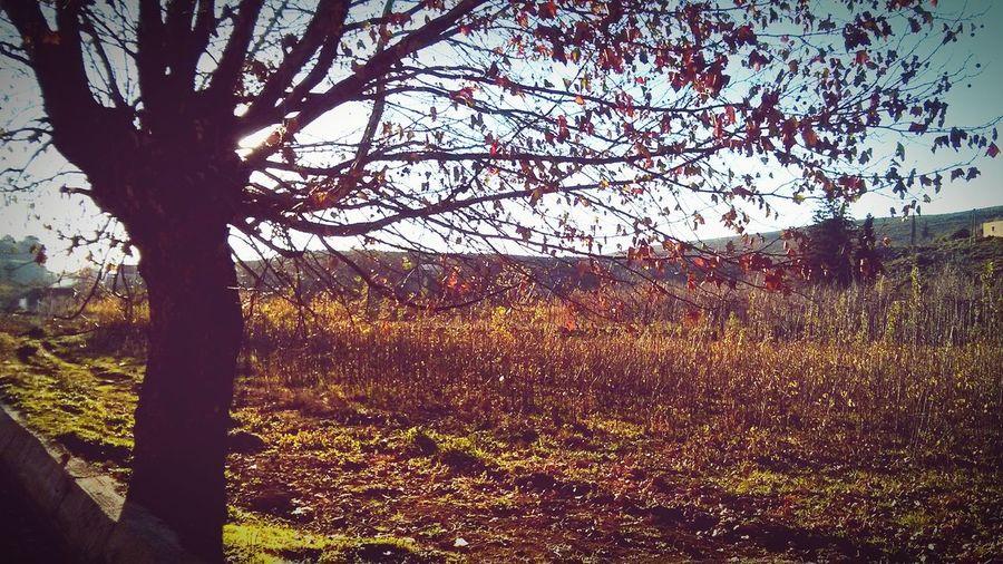 Azemour Autumn